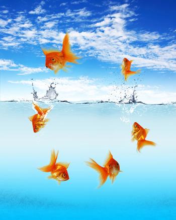 Goldfische zweit lteste zierfische for Zierfische teich